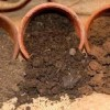 Variedades recomendables para distintos tipos de suelo - Viveros El Soto