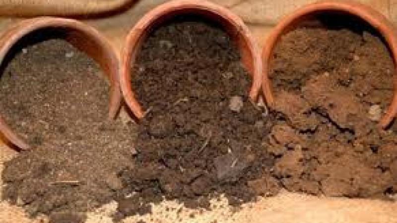 Variedades recomendables para distintos tipos de suelo