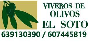 Vivero Olivos Hojiblanca